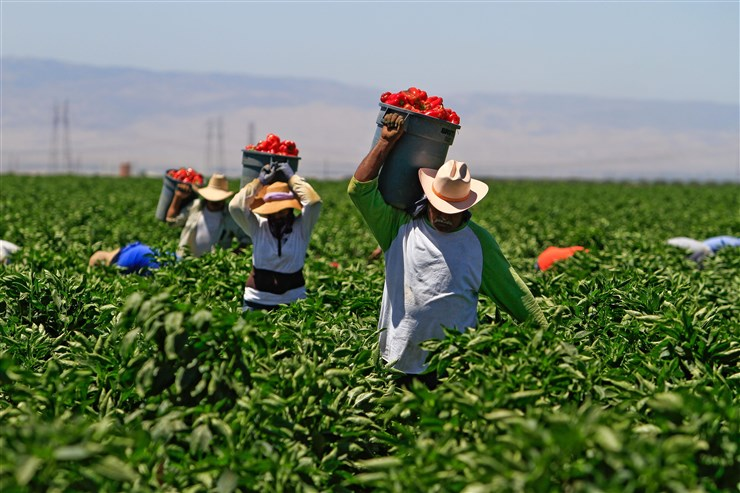 farmworkers-04-rrd-15