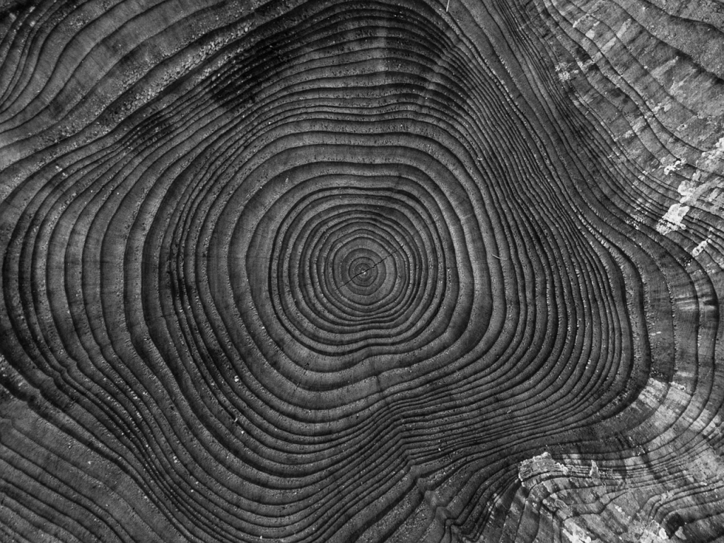 tree-1033614_1280